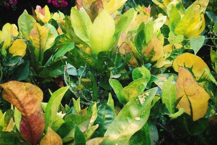 Lemon Lime By Motorola Leaf Leaves Tropical Multicolour Green Nature