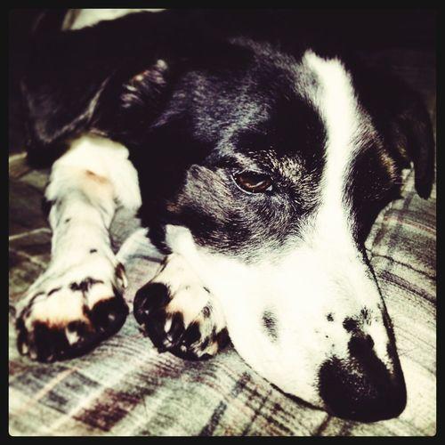 Lia I Love My Dog Dog♥ Cute Pets