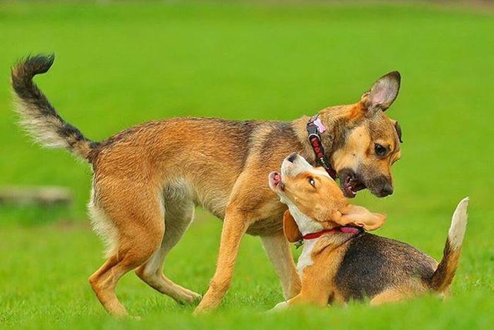 Worldpiesphoto Doglovers Instadog Pets Instapet Pies Piesel Gtcreate