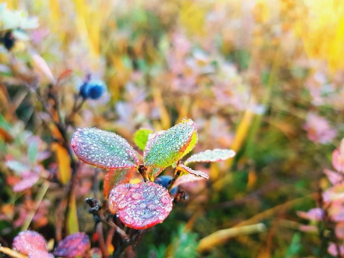 EyeEm Selects Nature Plant Outdoors Close-up Freshness Beauty In Nature No People Leaf Focus On Foreground