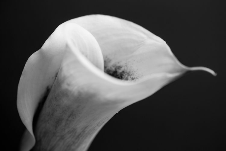 The Week On EyeEm Flower Black Background Freshness Lily Nature Close-up Fragility Beauty In Nature