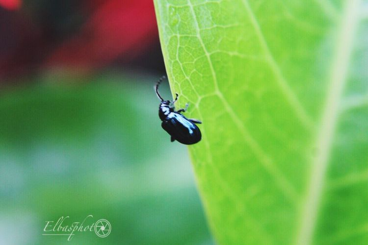 Bugs life #macrophotography #macrolens Invertebrate Animal Themes Insect Animal Wildlife Animals In The Wild Animal Close-up Leaf Green Color One Animal