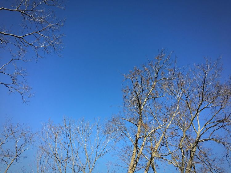Branches Branches And Sky Bare Tree Tree Low Angle View Blue Branch Clear Sky Nature Sky No People Outdoors Beauty In Nature Tranquility Growth Day Scenics Treetop