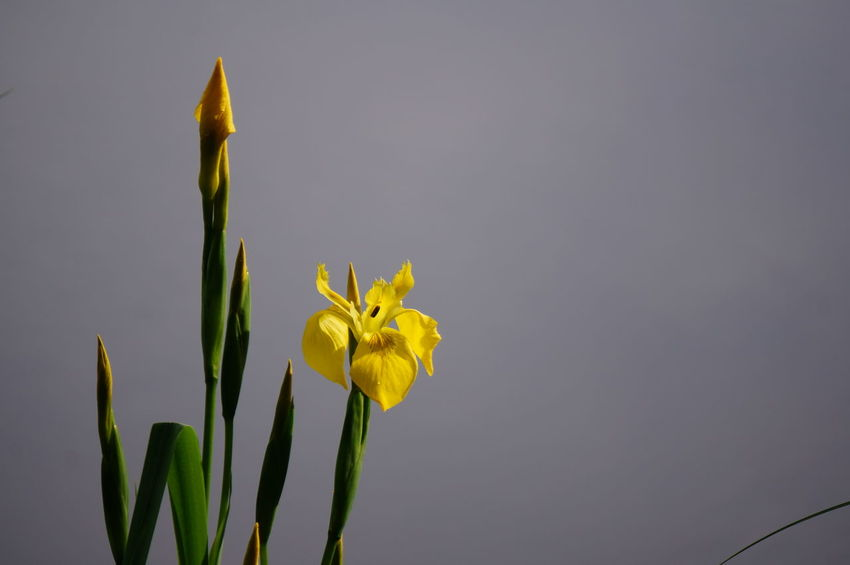 Wetland Beauty In Nature Close-up Flower Nature Outdoors Plant Yellow