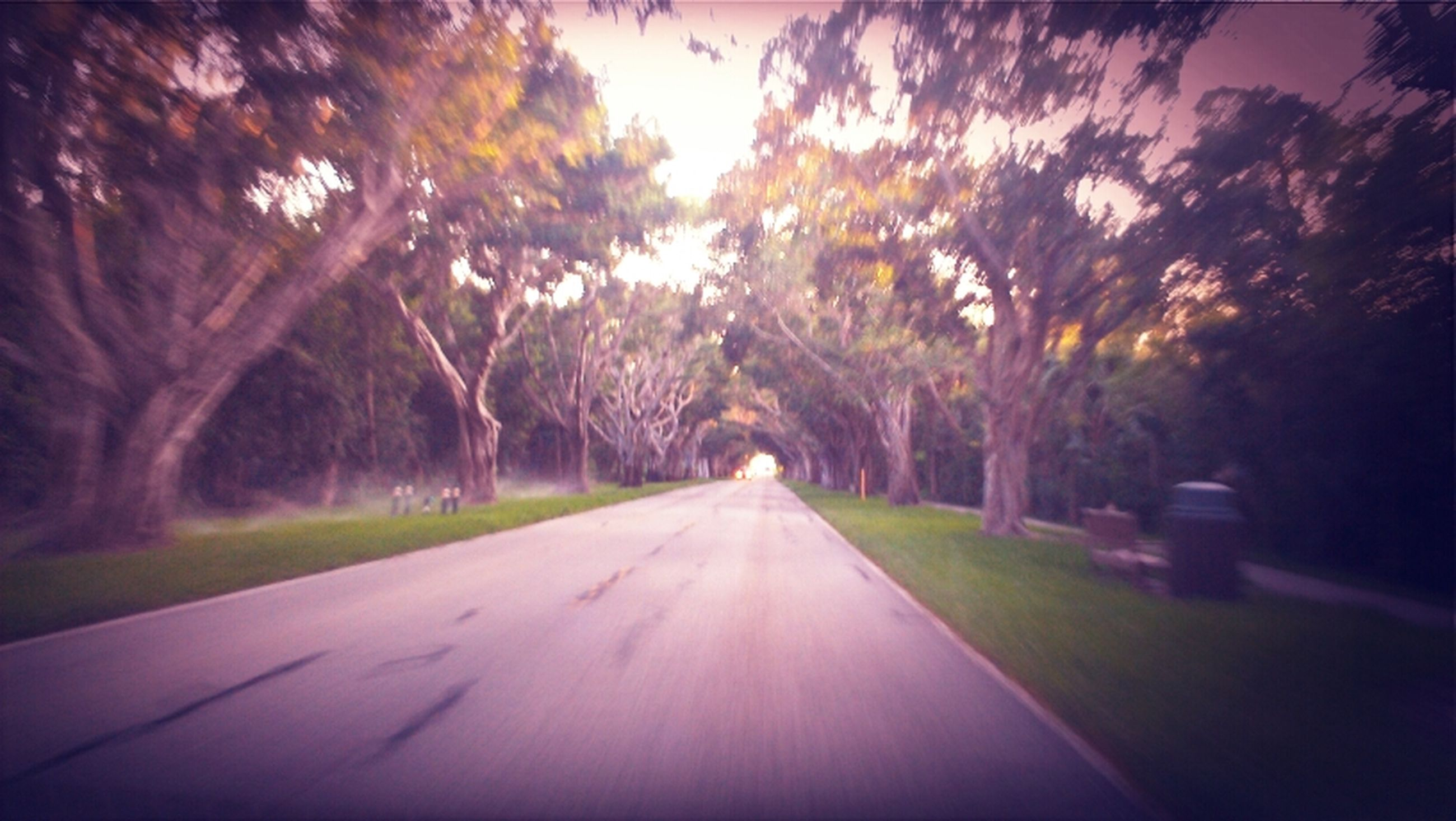 the way forward, tree, diminishing perspective, road, sky, vanishing point, transportation, illuminated, nature, dusk, outdoors, tranquility, night, growth, empty road, surface level, no people, empty, street, tranquil scene