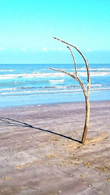 Tree Sea Sunday Wonderful Italian Beach First Eyeem Photo