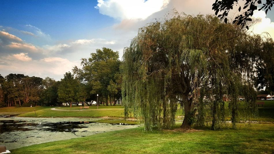 Treegasmic Tuesday My Cloud Obsession☁️ Its All About The Clouds🌤 Weeping Willow EyeEm Gallery EyeEm Nature Lover EyeEm Best Shots Eyeem Rural America EyeEm Best Shots - Nature Eye4photography  EyeEm Best Shots - My World Things I Find Beautiful The Essence Of Summer