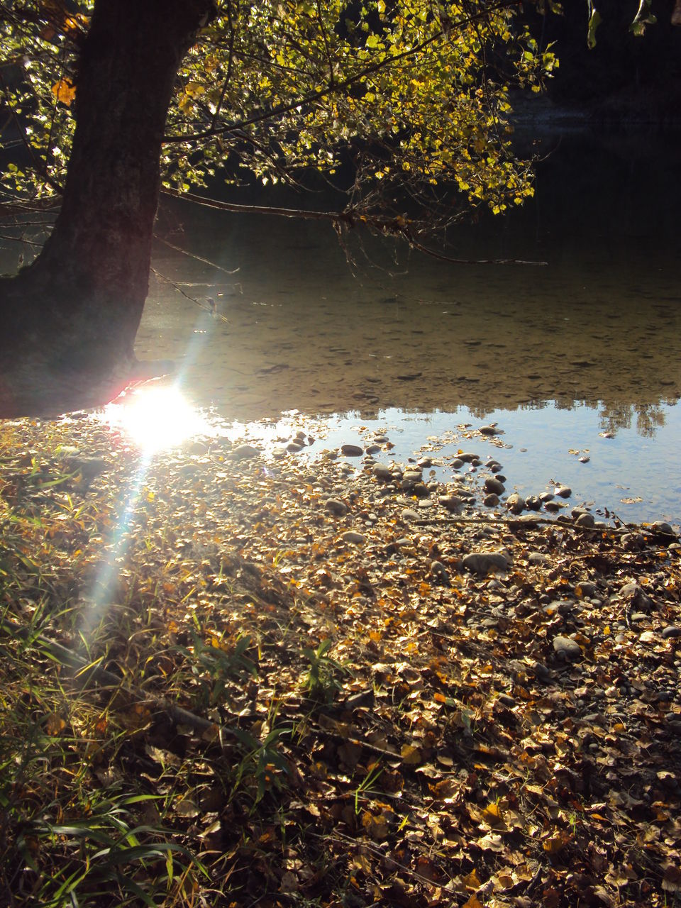 SUNLIGHT STREAMING THROUGH TREE IN FOREST DURING AUTUMN