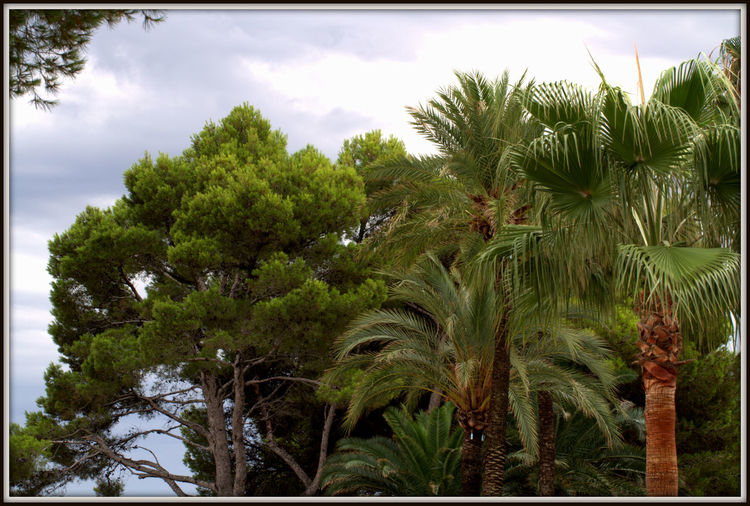 Flaura and Fauna of Alcudia Green Color Growth Plant Tree Beauty In Nature, Branch Branches And Leaves Close-up Day Flaura And Fauna Flaura And Fauna Of Alcudia Flower Head Flowers Fragility In Nature Leaf Nature No People Outdoors