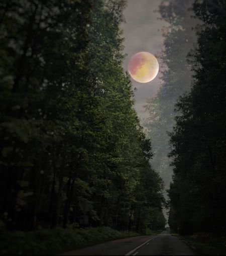 Haunting road Tree Road Moon Transportation Nature The Way Forward Outdoors Day No People Forest Beauty In Nature Sky Astronomy