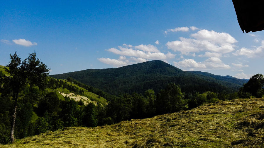 EyeEm Selects Mountain Nature Cloud - Sky Outdoors Beauty In Nature Day Sky Pine Tree Romania Made In Romania No People Summer Romanian  Sun
