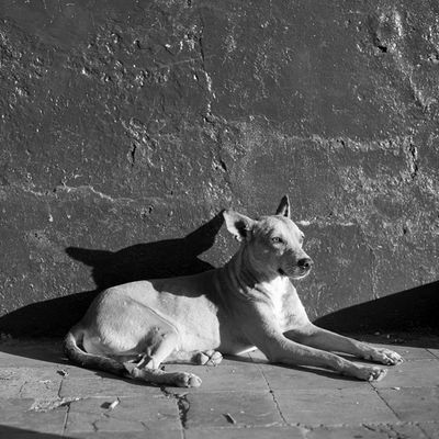 Nicaraguan pup 🐶 A sample from the Line and Form project I have been working on at www.daletidy.com. Link also in profile. DaleTidyPhoto LineAndForm Streetphotography Bnw BlackandWhite Nicaragua Dogsofinstagram Travel @nikontop
