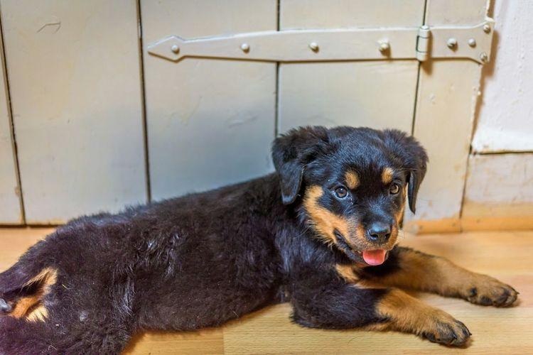 Pup Rottweiler Dogs Animals EyeEm Animal Lover Baden-Württemberg  Germany