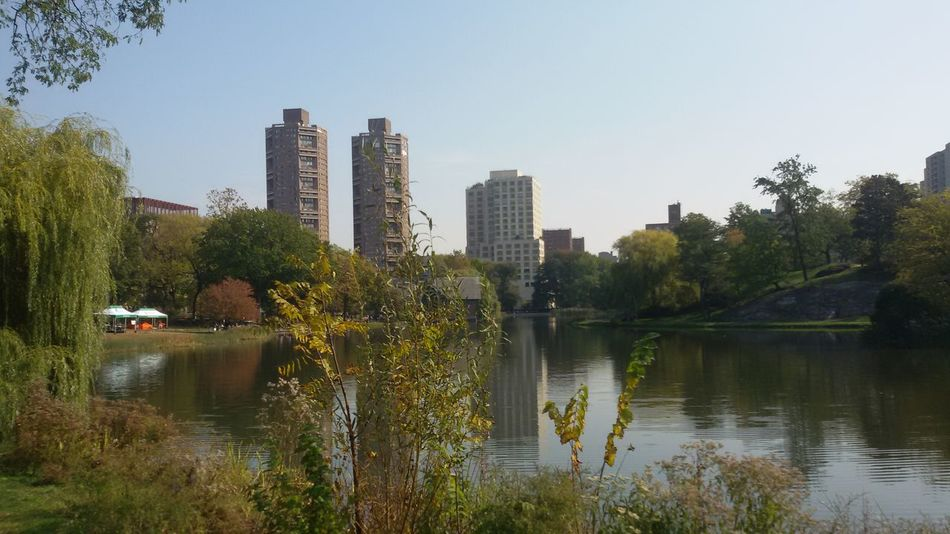 Architecture New York Nature In The City CentralPark Green Small Sea Tree No People Samsungphotography Beauty In Nature Trees Calm Water Like Or Love It Morning