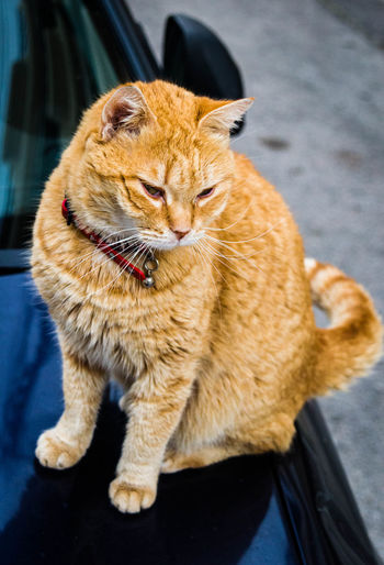 High angle view of cat sitting on car