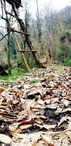 Simünet, ilimbey, kış, Şubat, çınar yaprakları Turkish Geyve Ilimbey Narure Day No People Nature Tree Water Outdoors Backgrounds Beauty In Nature Freshness
