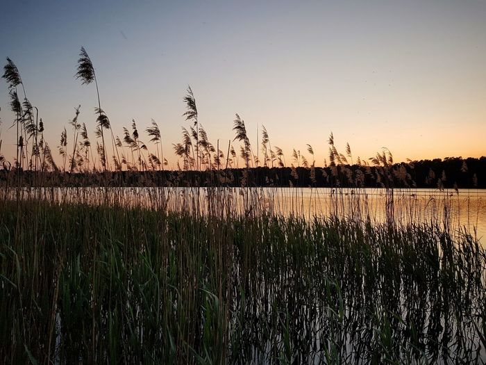 Sunset Lake Summer Reeds Lake Lake View Beauty In Nature Strausberg Strausberger See Sunset Silhouette Water Sky Grass Landscape Plant Wetland
