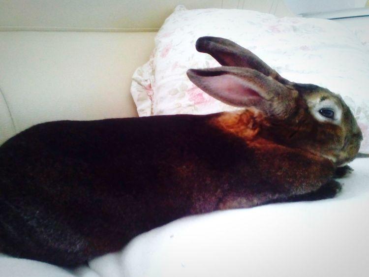My bunny? AnimaLs <3 Bunnys Bunny  Cute Animals Relaxing