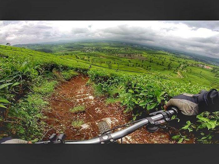 Bycicle Fatbike Fatbikeworld Downhill Teaplantation Val  2016 Gopro Gopro3plus Goproblackedition Goproeverything Gopro4life Goprooftheday Gopromoment 😚