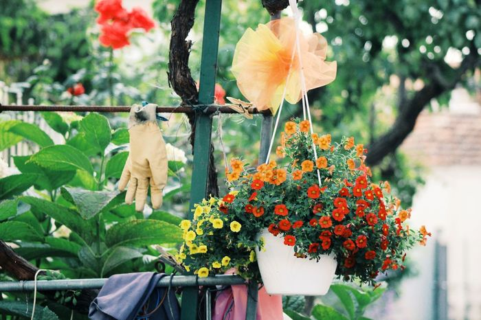 Flowers,Plants & Garden Country Life Countryside Gardening Gardening Equipment Gardening Gloves Flower Vase Lifestyles Quiet Life Hobby Exterior View External Building Showcase June Colour Of Life