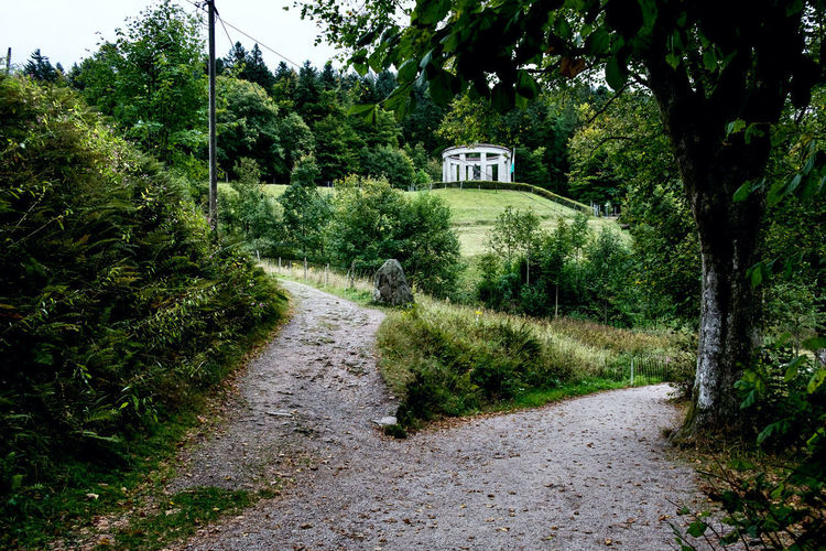 Road amidst trees and plants by building
