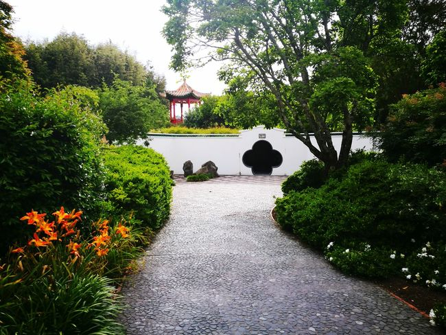 Tree Growth Green Color Nature Plant Outdoors Beauty In Nature Day No People Architecture Garden Path