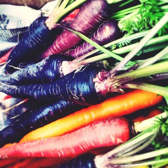 野菜やトラキ Itoshima Vegetables Carrot Carrots Red Purple Yellow いろち 人参 vegetable