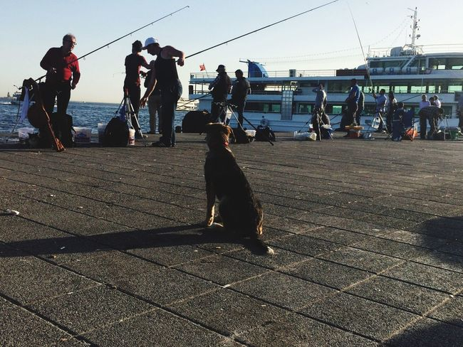 Dog Fisherman Besiktas