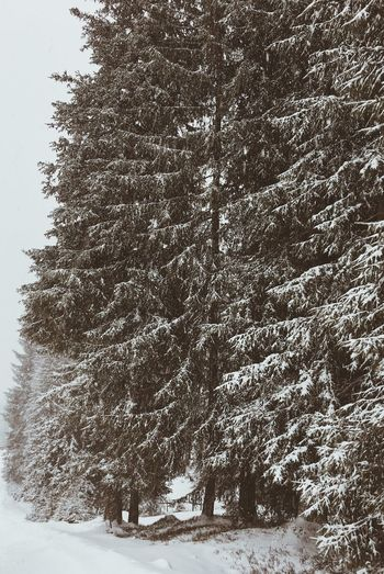 Snowfall Tree Forest Snowfall Mountain Nature Vscocam VSCO Winter Landscape Beauty In Nature WeLiveToExplore Landscape_captures Awesomeearth Wanderlust Mountainlove WeLoveNature  Southtyrol  Alps Pictureoftheday TravelThursday