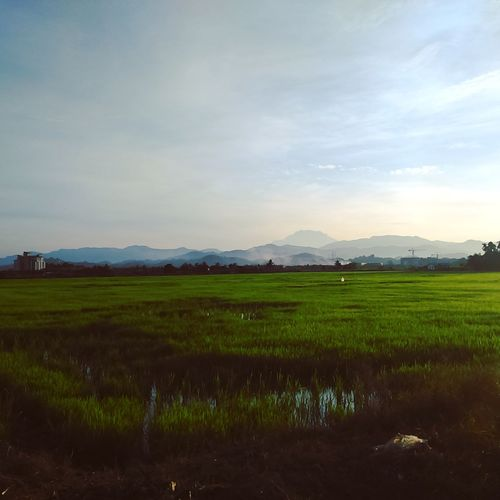 Paddy field. Taking Photos This Is My Hometown