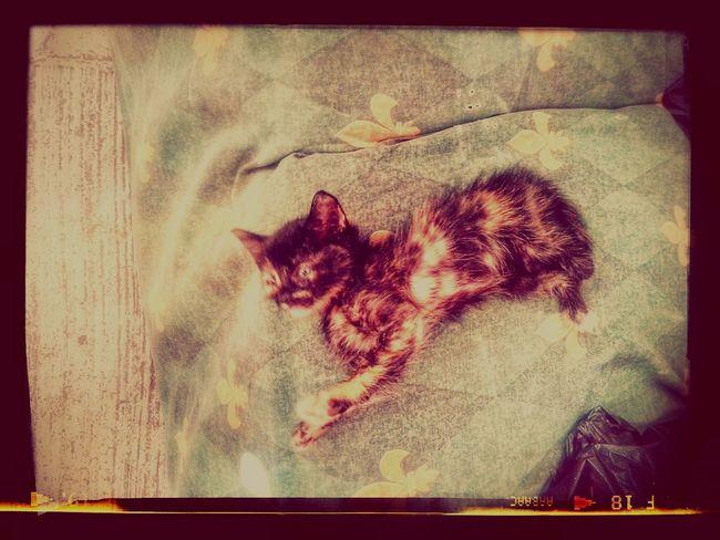 Cats 🐱 Wuevaporlamañana Loextraño