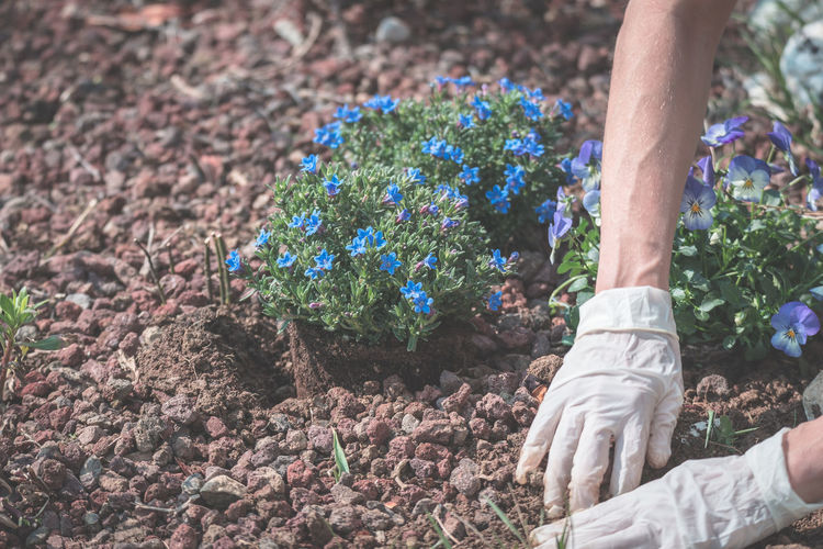 Springtime home gardening, planting flowers in soil Adult Adults Only Close-up Day Human Body Part Human Hand Human Leg Leisure Activity Lifestyles Low Section Men Nature One Person Only Men Outdoors People Real People