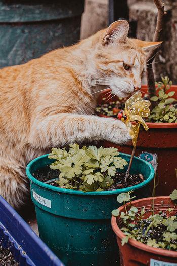 Cat standing in flower pot