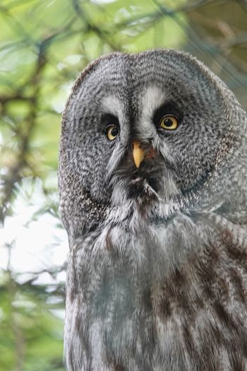 One Animal Animals In The Wild Animal Wildlife Portrait Owl Looking At Camera Vertebrate Bird Bird Of Prey Close-up Animal Body Part No People Day Focus On Foreground Nature Outdoors Front View Animal Eye