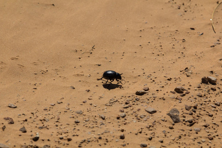 View of a spider on beach