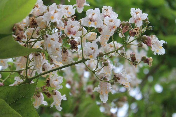 Chimayo New Mexico Tree Flower Branch Springtime Blossom Botany Close-up Plant
