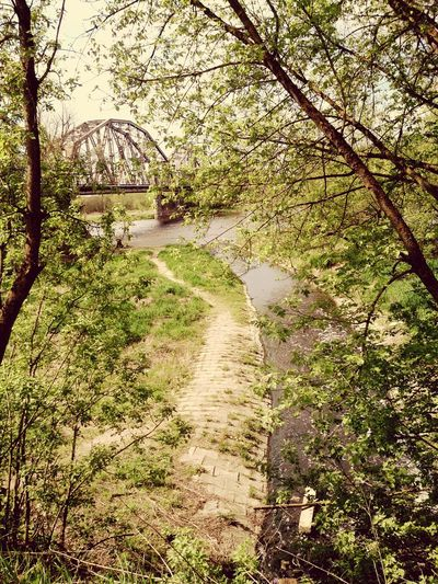 Ostrołęka Railway Bridge over Narew River Trees Urbanphotography Nature_collection Canal Water