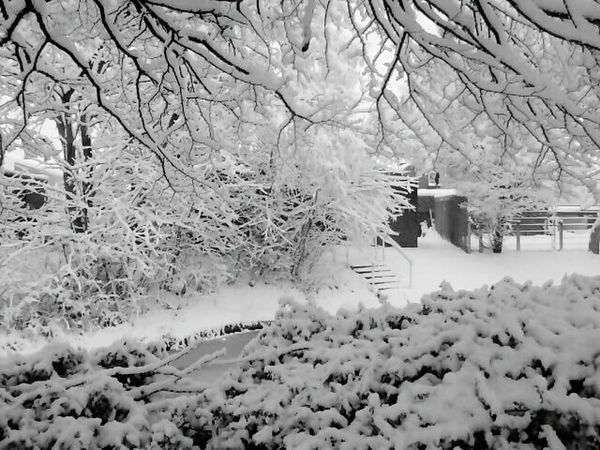 Things I Like i love the snow.....my favourite weather. We dont get it often here so when we do it is truly magical. Snow Snow Scene  White Clean Crisp Trees Snow Covered Snow Covered Branch Steps Slippery