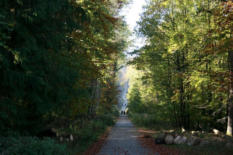 Ways Ways Through The World Spaziergang Spaziergang Durch Den Herbst. Waldspaziergang Herbststimmung Autumn colors Forest Direction The Way Forward Beauty In Nature Scenics - Nature Outdoors Diminishing Perspective WoodLand Footpath Autumn Mood