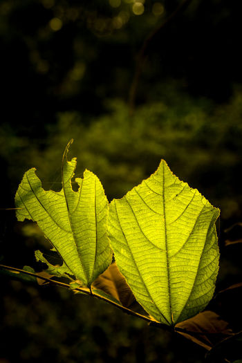 Nature, Leafs,