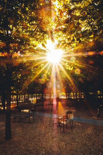 Beauty In Nature Chair Day Green Color Green Leaves Leaves Lens Flare Nature No People Outdoors Shiny Sky Sun Sun Through The Trees Sunbeam Sunbeams Sunflae Sunflares Sunlight Sunset Table Tree