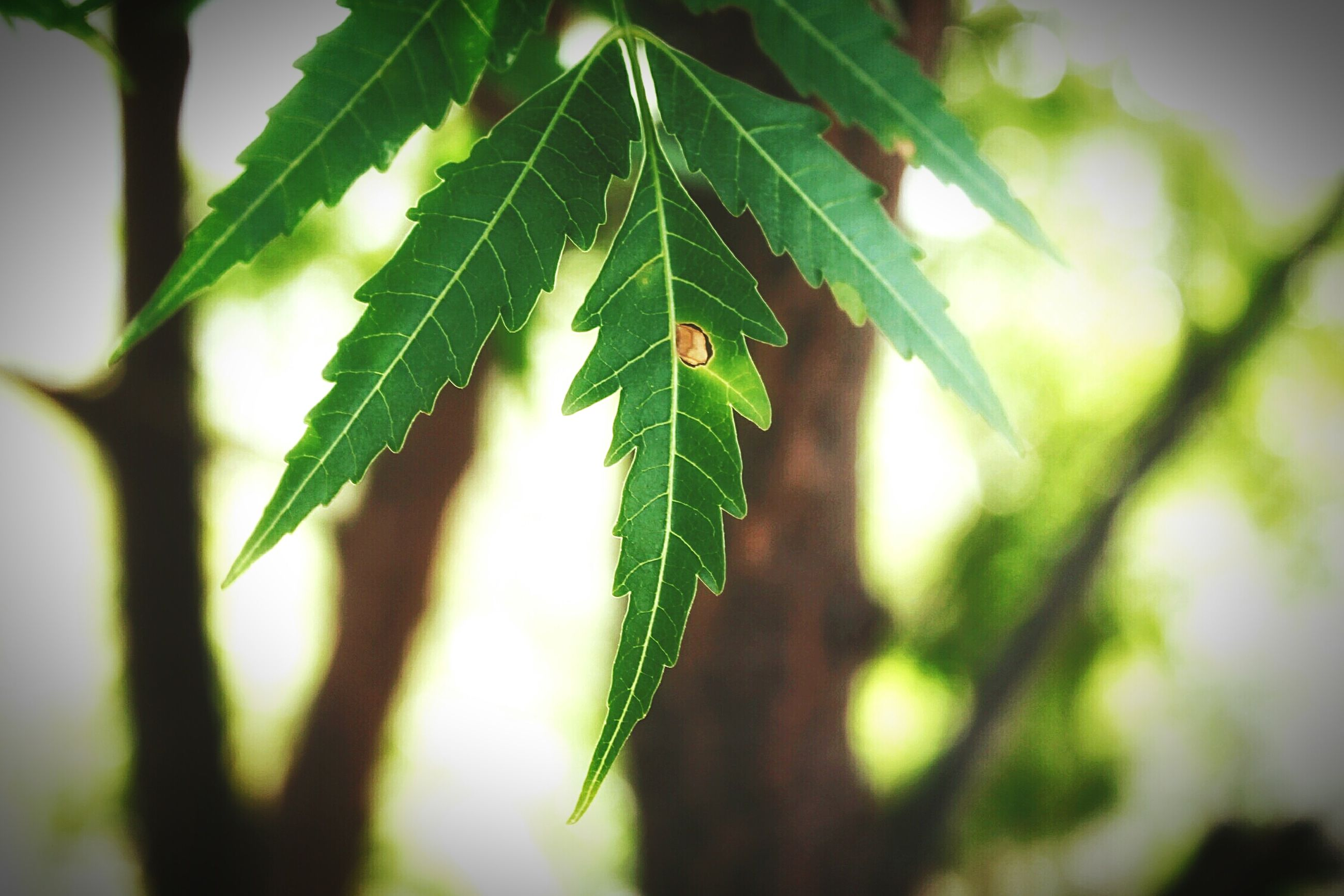 leaf, close-up, focus on foreground, growth, green color, plant, nature, selective focus, stem, twig, beauty in nature, freshness, day, outdoors, no people, green, tranquility, sunlight, branch, growing