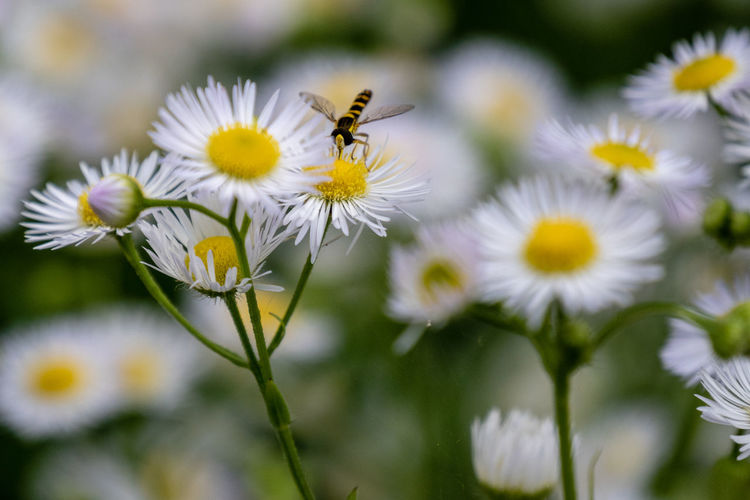 Macro Photography Close-up Flower Flowering Plant Focus On Foreground Growth Insect Macro No People One Animal Plant Pollen