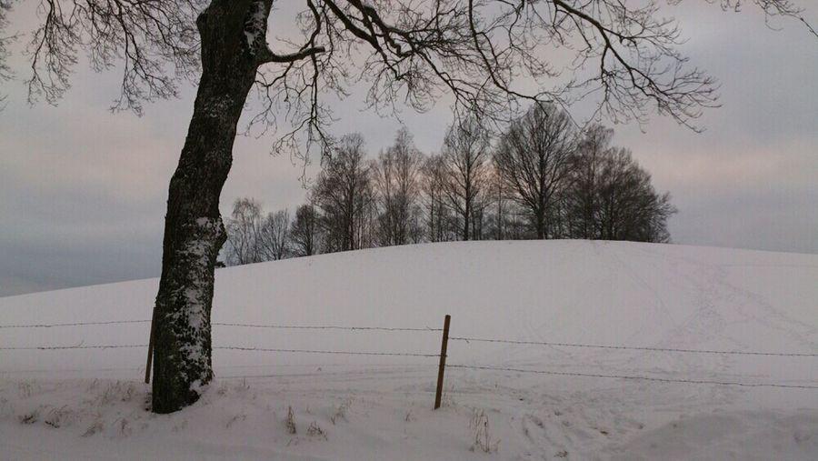 Landscape Trees Winter Snow Field Skiing Hillside The Purist (no Edit, No Filter)