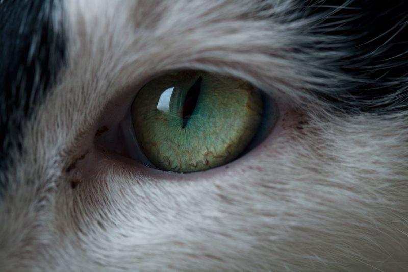 Pus<3 One Animal Pets Eyesight Cat Extreme Close-up Domestic Cat First Eyeem Photo My Best Photo