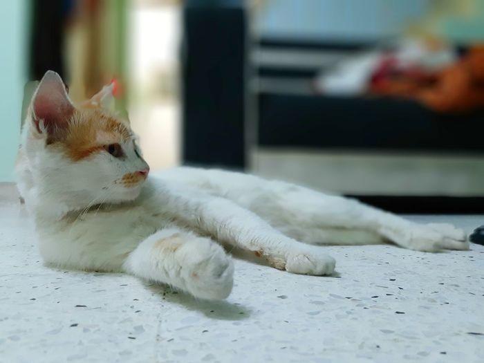 Resting Cats