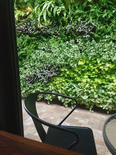 Plant Close-up Green Color