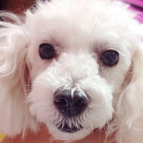 ?woof-woof Dogsofinstagram Dogslife Cute Pets Cute Dog