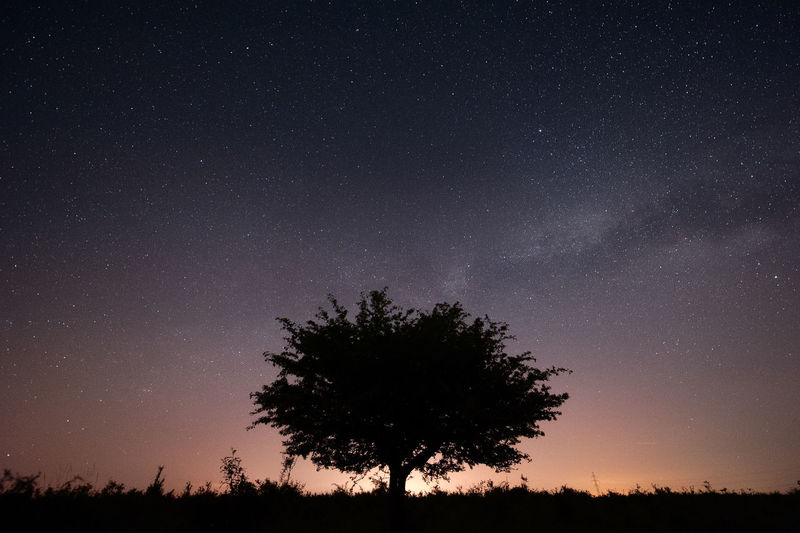 The one Astronomy Beauty In Nature Constellation Galaxy Lonely Milky Way Nature Night No People Space Space And Astronomy Star - Space Star Field Tree