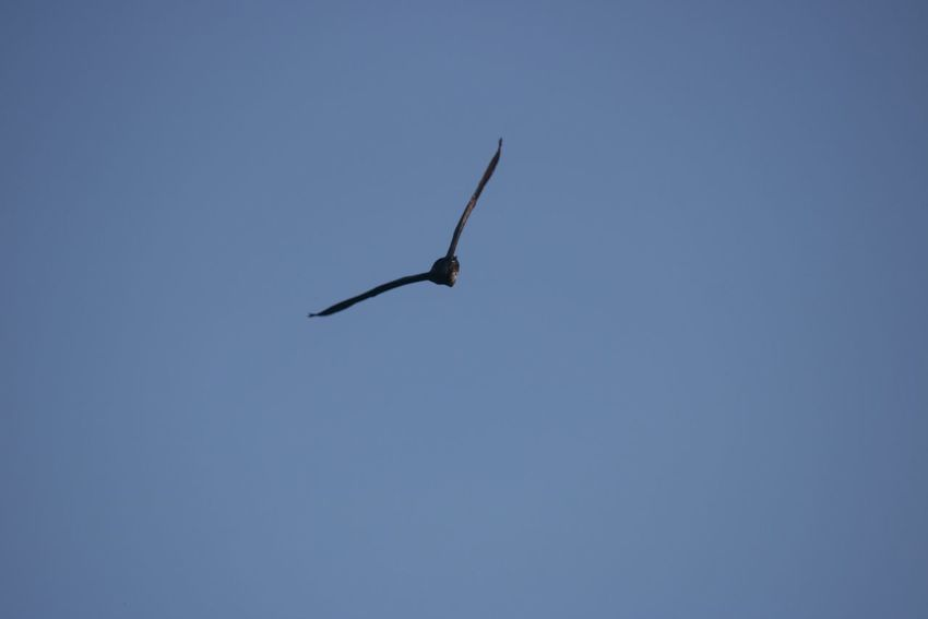 Bird in a Blue Sky over the Lake in Bois De La Cambre Uccle Brussels Belgium